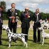 Dalmatinai 2010 m. Pasaulinėje šunų parodoje