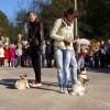 Jaunosios hendlerės demonstruoja paklusnumo programėlę