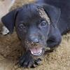 ar-veislynai-atsako-uz-parduota-genetine-liga-paveldejusi-suni