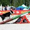 atrinkti-stipriausi-agility-sportininkai