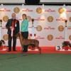 2012 12 16, 6 gr. nugaletojai