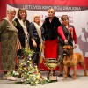 Bulmastifas - Lietuvos cempionu cempionas 2013