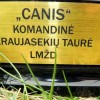 CANIS taure