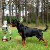 rotveileriu-augintoju-sekme-cempionate