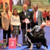 European dog show 2013, 2 place