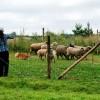 Valu korgis laiko aviu ganymo testa