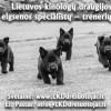 sunu-elgsenos-specialistai-informuoja