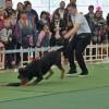 Smart dog komanda