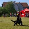 Smart dog komandos programa