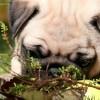 suns-isigijimas-uzsienyje-kas-svarbu